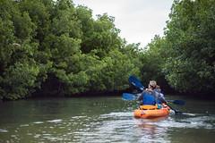 iguanas (jkenning) Tags: puertorico kayaking fajardo 2016 biobay lagunagrande bioluminescentbay gregoryw