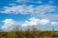 Cool Clouds (hecticskeptic) Tags: arizona birds spring woodpecker squirrel hummingbird desert cardinal nogales birding az deer hummingbirds morgan californiadesert maderacanyon arizonadesert southernarizona mexicanjay eleganttrogon lakepatagonia markmorgan markamorgan