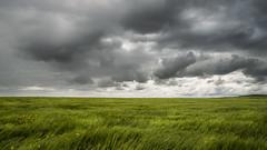 Agua de mayo... (Javier Daz Barrera (javierdiazbarrera.es)) Tags: sky storm verde green rain clouds landscape lluvia wheat sony paisaje cielo nubes tormenta campo trigo a99 minolta1735 javierdiaz villasabariego javierdaz javierdb javierdazbarrera javibichos javierdiazbarrera javierdiazbarreraes