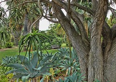 Front Row Seats (MacroMarcie) Tags: trees palm socal huntingtonlibrary southerncalifornia botanicalgardens hbm hss pasadenaca palmgarden benchmonday slidersunday macromarcie