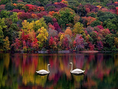 autunno (margheritabellettati) Tags: background