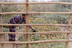 Nursery - Bangla Version (Sheikh Shahriar Ahmed) Tags: morning plant film shop analog candid nursery fujifilm dhaka bangladesh minoltasrt101 banasree shopkeeper fujicolorc200 dhakadivision mcrokkorpf55mmf17 pacificimage aftabnagar sheikhshahriarahmed primefilm3650pro3
