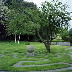 Millennium Garden in 6x6 (Noah MM) Tags: tree green texture 6x6 film nature rollei mediumformat garden kodak foliage analogue xenar rolleicord schneiderkreuznach ektar c41 tetenal