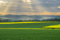 Morgendliche Sonnenstrahlen - Morning sunbeams (Der Gnurz) Tags: sunset landscape felder fields sunrays landschaft sonnenaufgang raps sonnenstrahlen sunbeams raysofsunlight