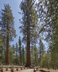 Sequoia National Park  16 (Largeguy1) Tags: park blue sky nature landscape national dxo approved sequoia
