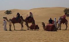 The Caravan (pam's pics-) Tags: people nature animal animals dubai desert natural wildlife uae camel caravan camels unitedarabemirates arabiandesert pammorris shipsofthedesert pamspics sonya6000 dubaidesertconservationarea