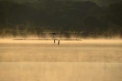 An Osprey Returns to Nest (wetenz) Tags: birds fog sunrise dawn nest foggy birdsinflight westport orangelight osprey ospreynest westportriver southeasternmassachusetts westportmassachusetts nikond800 02790