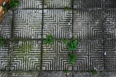Ladrilhos 002 (Breno Correa Filho) Tags: pelotas riograndedosul sul brenocorreafilho