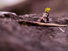 The King (johannahphoto) Tags: summer macro finland monkey