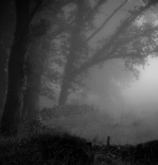 Ghostly (bladeshunner1) Tags: blackandwhite blackwhite cloud fog mist outdoor tree wood copse
