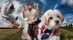 'Merica! Nuff said.  [#DogDad #Awesome #4thofJuly #Awesomeness #July4 #RescueDog #RescuePup #Baxter #DogLife #StarsAndStripes #youateawholewheelofcheese #SanDiego #DogChild #dog #MyBaby #BestFriend #Anchorman #MyBuddy #dogsofinstagram #fuzzyfeetdogrescue (markrondeaupresents) Tags: doglife dogchild fuzzyfeetdogrescue bestfriend dogsofinstagram anchorman baxterdog starsandstripes dogdad awesomeness sandiego july4 mybaby rescuedog rescuepup awesome mybuddy youateawholewheelofcheese sddog baxter 4thofjuly dog