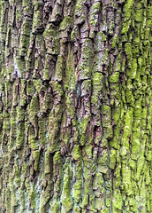 Rinde (drloewe) Tags: wood tree arbol baum baumstamm