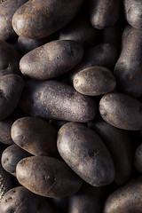 Raw Organic Purple Potatoes (brent.hofacker) Tags: blue food color nature potatoes healthy raw noir purple natural skin market sweet maroon harvest violet tasty vegetable fresh delicious whole potato health pile crop vegetarian carbohydrate produce organic diet agriculture peel root vitamins nutrition nutritious ingredient tuber carb vitamin uncooked violette starchy purplepotato blueviolet nutrient purplepotatoes vitelotte