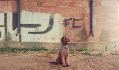 My dog Chip (missschokoholic) Tags: dog color cane handy graffiti colore outdoor wand sony perro hund smartphone miss labradoodle farbe z3 bunt compact mauer telefonino chio schokoholic xperia