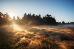 golden september (Rainer Schund) Tags: golden september nikon natur nature natureexploring naturemasterclass nebel nikond4 gras forest light lichtstimmung licht lichtstrahlen lightrays lichter lines linien