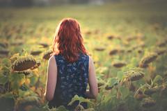 Serenity (Gure Elia) Tags: girl redhead peliroja sunset sunflower flower september summeralmostgone back espaldas samyang135f2 canoneos5dmarkii navarra berriosuso