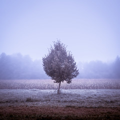 Lonely (matthiasstiefel) Tags: nebel mist fog tree autumn frost cold