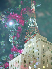Moonlight Blooming (Film Swap) (m_travels) Tags: flower bloom building architecture westwardho night moon light filmswap doubleexposure sanfrancisco phoenix california arizona analog filmphotography kodakportra160 surreal argentique experimental art highrise tower
