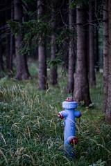 The odd one out ... (holzer_r) Tags: hydrant wood wald blau blue red rot firehydrant hohewand austria loweraustria niedersterreich odd rumpelstilzchen
