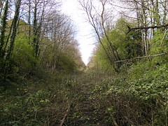 The Croxley Green branch in 2008 (TheStanstedTrainspotter) Tags: abandoned overgrown weeds track branch br transport tracks rail railway disused britishrail hertfordshire watford grandunioncanal nse watfordjunction croxleygreen networksoutheast branchline watfordwest watfordstadium