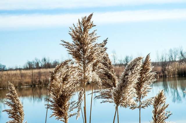 Blue Grass Fish & Wildlife Area - January 5, 2015