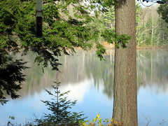 Steam Rising From The Water. (dccradio) Tags: trees sky lake ny newyork reflection tree water fog clouds upstate bluesky adirondacks steam greenery duane malone longpond bodyofwater lakeduane