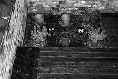 MoNovember 3 - Gardening At Night (zawtowers) Tags: white plant black monochrome yard garden 50mm mono back looking darkness down decking fifty hebe monovember afsnikkor50mmf18g