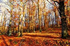 Mediterranean forest (emanuele fer) Tags: trees light italy nature alberi forest landscape italia natura luce foresta