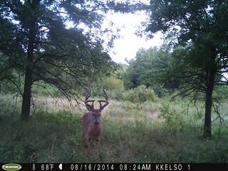 Kansas Trophy Whitetail Bow Hunt 38