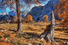 Stump in Autumn (danielgaudardazevedo) Tags: autumn panorama mountains alps nature landscape slovenia stump slovenija wilderness larch sleme vri 500px ifttt