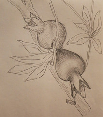 granate_2 (grushechka) Tags: pencil sketch pomegranate