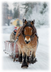 Slädtur i Ingels (G Er Foto) Tags: horse vinter nemo sweep pregame drafthorse häst släde rättvik ingels ardenner gamewinner arbetshäst thechallengegame slädtur gamex2 herowinner ultraherowinner gamex3 pregamewinner