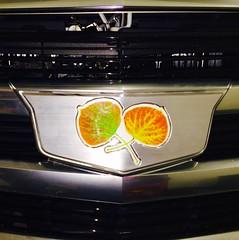 Custom Caddy logo!