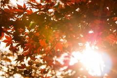 DSC_7930.jpg (d3_plus) Tags: park street autumnfoliage sky nature japan garden scenery outdoor fine sunny 日本 streetphoto yokohama 紅葉 自然 空 横浜 風景 j4 公園 三渓園 sankeien 路上 sankeiengarden ストリート 晴れ ニコン nikon1 屋外 路上写真 1nikkorvr10100mmf456 ニコン1 nikon1j4 ニコンワン