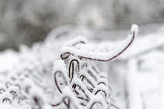 It is snowing ! (Darius Bauys) Tags: winter white snow fence wire snowing d7000
