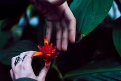 (lindseykusterman) Tags: flowers portrait plants green minnesota stpaul minneapolis conservatory mpls jungle twincities lush stp
