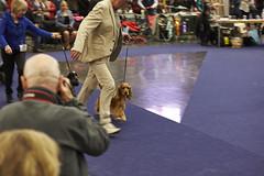MyDOG 2015 Cocker spaniel (Svenska Mässan) Tags: dog dogs hund spaniel cocker dogshow mydog hundar svenskamässan hundutställning hundtävling hundmässan västrakennelklubben hundmässa hundevenemang mydog2015
