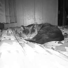 Olly blends right in #TagStaGram #cat... (mrossman6) Tags: pet cats pets love nature animal cat kitten sweet kitty kittens cutie ilovemycat ilovemypet catlovers catlover tagsta petsagram petstagram catstagram catsofinstagram tagstagram instacat tagstanature picpets instapets uploaded:by=flickstagram funpetlove instagram:photo=8755222507396035421415099661