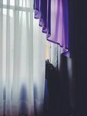 Stalker (GreenPool5) Tags: cute me window cat bed bedroom purple bruce kitty gato janela lilas greenpool