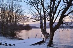 Luss Lodging (Michelle O'Connell Photography) Tags: trees winter snow tree nature landscape scotland scenery scottish lodge dumbarton lochlomond luss a82 argyllbute michelleoconnellphotography