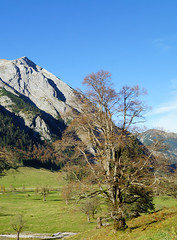 DSC03494 (***Images***) Tags: alps tree tirol berge alpen baum groupforeveryone saariysqualitypictures interestinggroup natureandpeopleinnature
