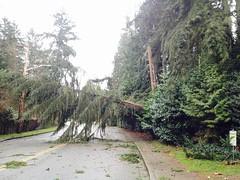 Damage captured near Simons Road NE and 79th Pl in Kenmore. (Puget Sound Energy) Tags: usa power unitedstates wind wash damage restoration pse kingcounty outage pugetsoundenergy kemore beastmode