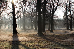 Oak wood (I.M.W.) Tags: winter mist tree sunrise oak frost freeze