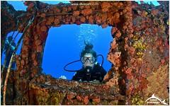 Explorer's Week Log - Week 19, 2016 (Ocean Explorers St. Maarten) Tags: borderfx