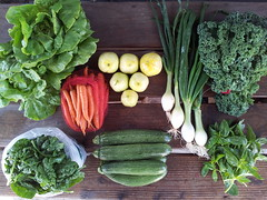 Suzie's CSA Box, Week of May 16 - 22