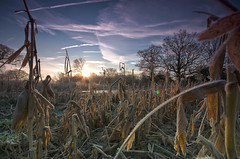 Dormant (SimonTHGolfer) Tags: uk england sky ice nature field sunrise wow landscape dawn suffolk corn nikon frost crystals farm sigma wideangle bluesky frosty lensflare 1020mm maize hdr highdynamicrange landscapephotography ultrawideangle subtlehdr littleglemham d5100 simontalbothurnphotography