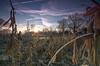 Dormant (SimonTHGolfer) Tags: uk england sky ice nature field sunrise wow landscape dawn suffolk corn nikon frost crystals farm sigma wideangle bluesky frosty lensflare 1020mm maize hdr highdynamicrange landscapephotography ultrawideangle subtlehdr littleglemham d5100 simontalbothurnphotography