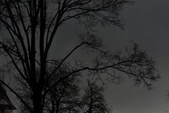 gloomy cloud tree house (fdfotografie) Tags: silhouette flora outdoor pflanze wolken haus struktur dmmerung tageslicht dslr ste baum muster dunkel zweige textur schattenriss bewlkt dster farbfoto verzweigungen querformat lichtstimmung d7100
