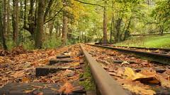 wildwood by rail (arbitragery) Tags: portland traintracks washingtonpark