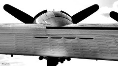 a wing and a prayer (AceOBase....) Tags: life light blackandwhite usa white man black love beautiful america vintage reflections airplane photography rebel daylight fighter peace ride artistic action oneofakind aircraft ace wwii flight wing engine machine icon lookup airshow attitude ww2 warrior airforce veteran bomber legend heroic attraction warplane vintageaircraft artisticexpression blackwhitephotos hangingoutwiththefamily alltypesoftransport ilovemy50d